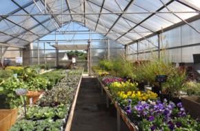 Greenhouse Shop