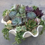 Create a Succulent Centerpiece! Wednesday, April 26th, 6-7pm