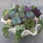 Create a Succulent Centerpiece! Wednesday, April 26th, 6-7pm