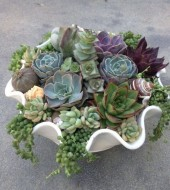 Event Fee- Outdoor Succulent Centerpieces, Saturday, April 16th, 10-11am
