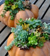Event Fee:  Create FALL table decor featuring SUCCULENTS, Saturday, Sept. 17th, 1-2:30pm