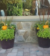 Event Fee:  Create a Transitional Planter, Sat., Oct. 15th, 10-11am