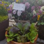 Container Gardening with Vegetables & Herbs, Sat., April 22nd, 1-2pm