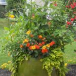 Create a Hummingbird/Butterfly Garden! Tuesday, May 23rd, 6-7pm