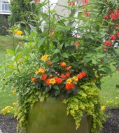 Event Fee:  Create a Hummingbird/Butterfly Garden at our KKV location, Sat., June 10th, 10-11am