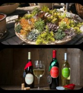 Event Fee:  Sip & Plant Succulent Potting Party at Waltz Vineyards in Kitchen Kettle Village, Tues., May 2 @ 6pm, $20